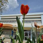 tulip_square